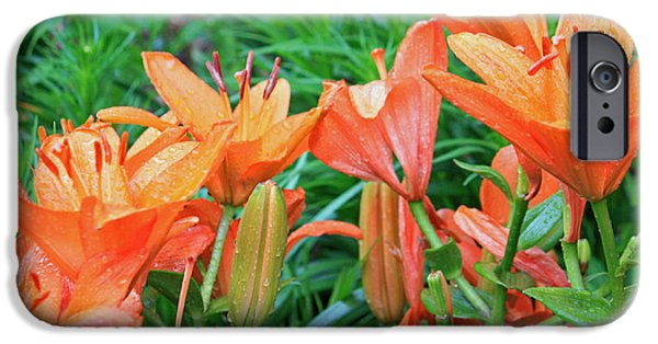 Asiatic Lily iPhone Cases - Lily Love iPhone Case by Suzanne Gaff