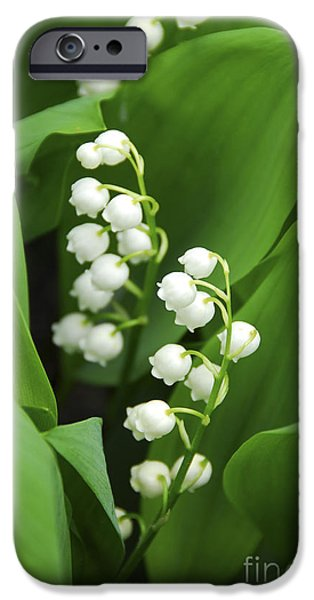 Floral Photographs iPhone Cases - Lily-of-the-valley  iPhone Case by Elena Elisseeva