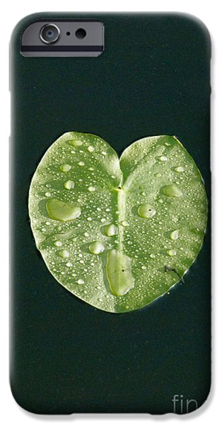 Aquatic Plants iPhone Cases - Lily Pad iPhone Case by Mark Newman