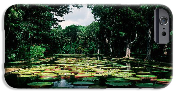 Botanical iPhone Cases - Lily Pads Floating On Water iPhone Case by Panoramic Images