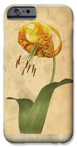 Lilium iPhone Cases - Lily painting with textures iPhone Case by John Edwards
