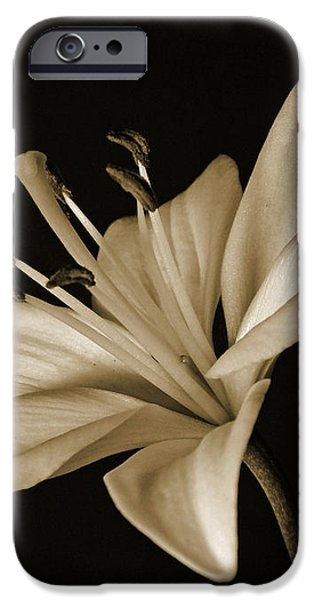 Lily iPhone Case by Sandy Keeton