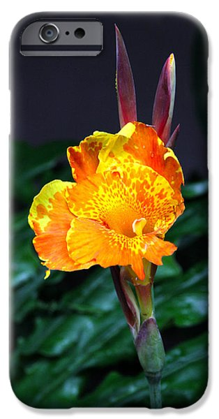 Canna iPhone Cases - Lilys Ears iPhone Case by Paul Anderson