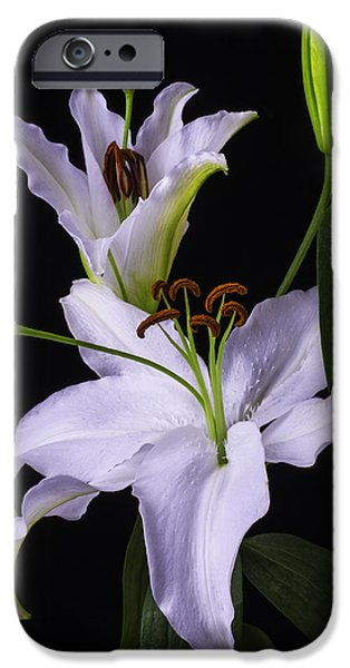 White Tiger iPhone Cases - Lilys In Bloom iPhone Case by Garry Gay