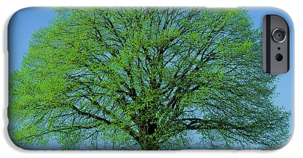 Flower Of Life iPhone Cases - Linden Tree In Spring iPhone Case by Hermann Eisenbeiss