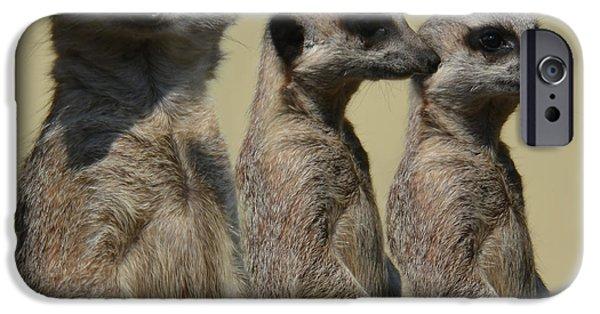 Fury iPhone Cases - Line dancing meerkats iPhone Case by Paul Davenport