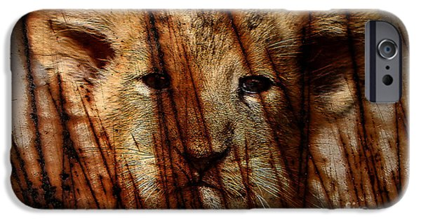 Lion iPhone Cases - Lion Cub iPhone Case by Marvin Blaine