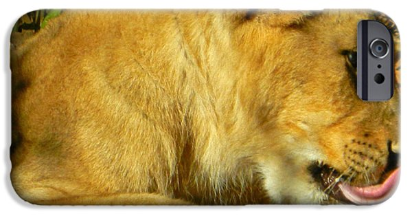 Smithsonian iPhone Cases - Lion Cub - What A Yummy Snack iPhone Case by Emmy Marie Vickers
