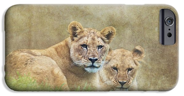 Lion Photographs iPhone Cases - Lion Cubs iPhone Case by Angie Vogel