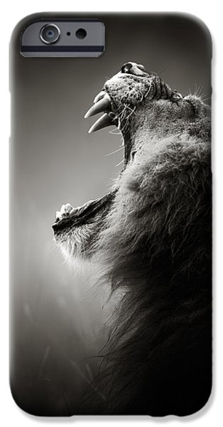 Lion Art iPhone Cases - Lion displaying dangerous teeth iPhone Case by Johan Swanepoel