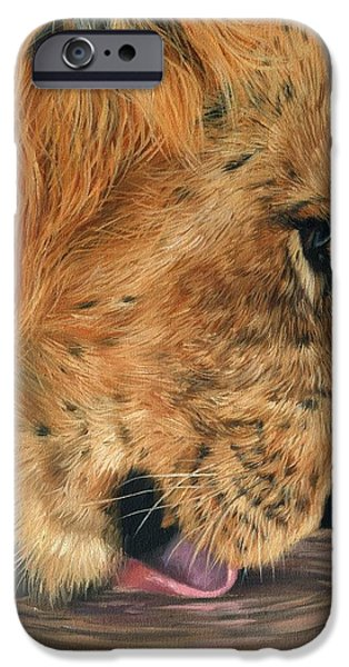 Lion Drinking iPhone Case by David Stribbling