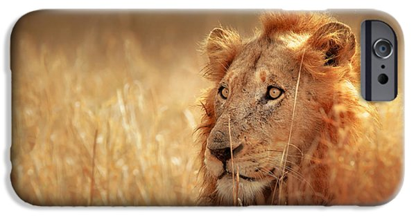 Big Hair iPhone Cases - Lion in grass iPhone Case by Johan Swanepoel