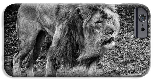 The Tiger iPhone Cases - Lion On The Prowl iPhone Case by Mike Burgquist