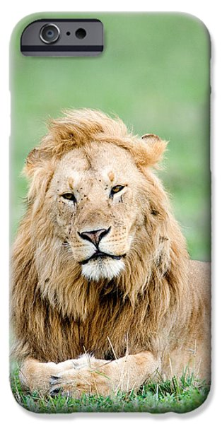 Masai Mara Photographs iPhone Cases - Lion Panthera Leo Lying In Grass, Masai iPhone Case by Panoramic Images