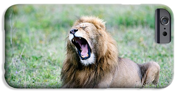 Fauna iPhone Cases - Lion Panthera Leo Yawning In A Field iPhone Case by Panoramic Images