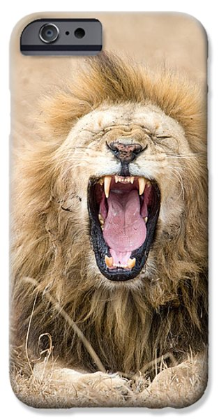 Wild Animals iPhone Cases - Lion Panthera Leo Yawning In A Forest iPhone Case by Panoramic Images