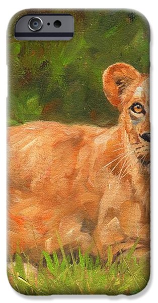 Lioness iPhone Case by David Stribbling