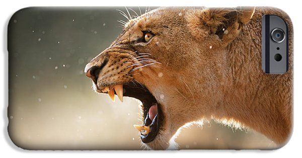 Animal Photographs iPhone Cases - Lioness displaying dangerous teeth in a rainstorm iPhone Case by Johan Swanepoel