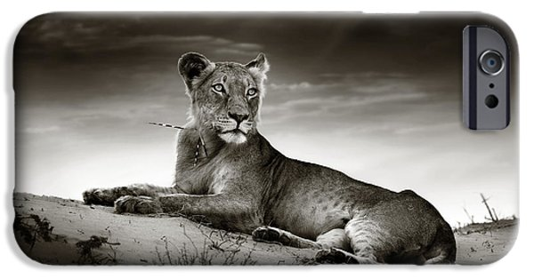 Safari iPhone Cases - Lioness on desert dune iPhone Case by Johan Swanepoel