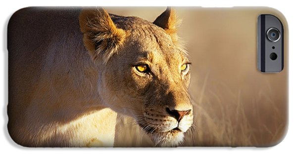 Power iPhone Cases - Lioness portrait-1 iPhone Case by Johan Swanepoel