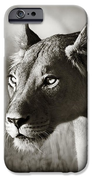 Lioness stalking iPhone Case by Johan Swanepoel