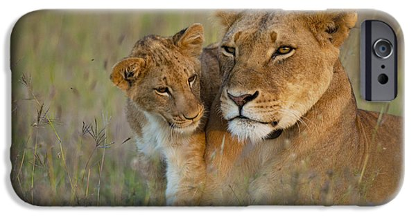 Simple Beauty In Colors iPhone Cases - Lioness With Cub At Dusk In Ol Pejeta iPhone Case by Ian Cumming