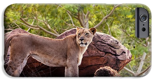 Florida Wildlife iPhone Cases - Lioness iPhone Case by Zina Stromberg