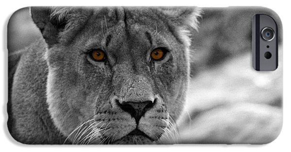 Lion Photographs iPhone Cases - Lions Eyes iPhone Case by Martin Newman
