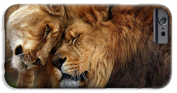 Animal Photographs iPhone Cases - Lions in Love iPhone Case by Emmanuel Panagiotakis