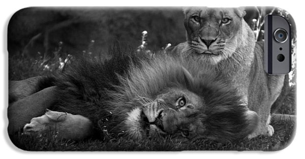 Central Il iPhone Cases - Lions Me And My Guy iPhone Case by Thomas Woolworth