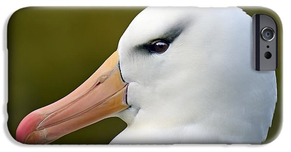 Albatross iPhone Cases - Lipstick and Mascara iPhone Case by Tony Beck