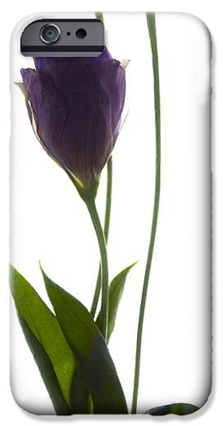 Botanical iPhone Cases - Lisianthus Duo iPhone Case by Julia McLemore