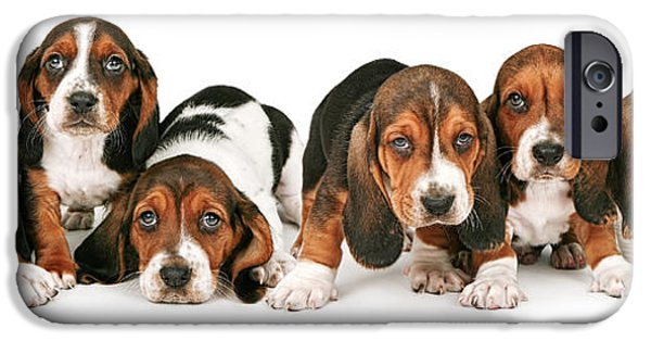 Black Dog iPhone Cases - Litter of Basset Hound Puppies iPhone Case by Susan  Schmitz