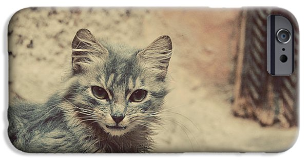 Stray iPhone Cases - Little Adventurer iPhone Case by Danny Van den Groenendael