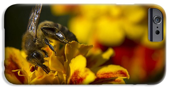 Little Pyrography iPhone Cases - Little Bee iPhone Case by Radivoj  Cvetojevic