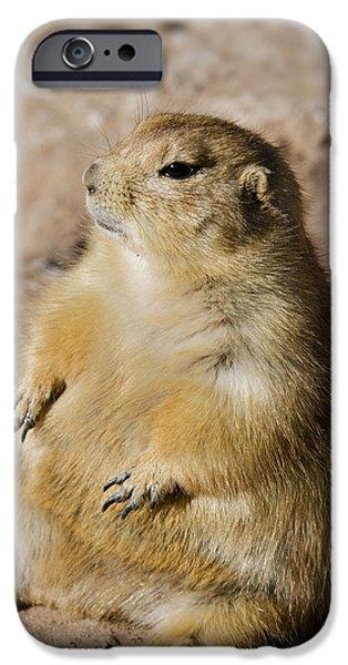 Prairie Dogs iPhone Cases - Little Buddha iPhone Case by Saija  Lehtonen