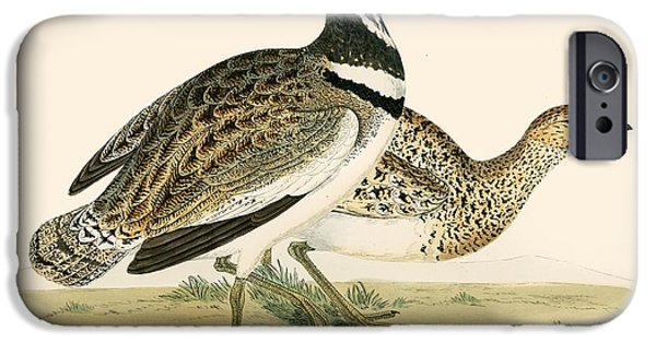Hunting Bird iPhone Cases - Little Bustard iPhone Case by Beverley R. Morris