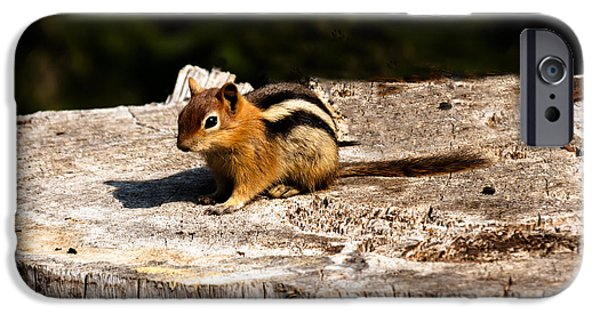 Bushy Tail iPhone Cases - Little Chipmunk iPhone Case by Robert Bales