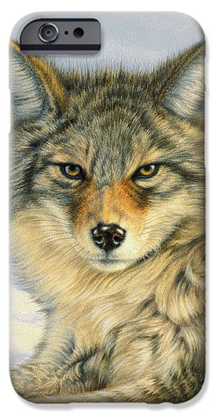 Coyote iPhone Cases - Little Coyote iPhone Case by Paul Krapf