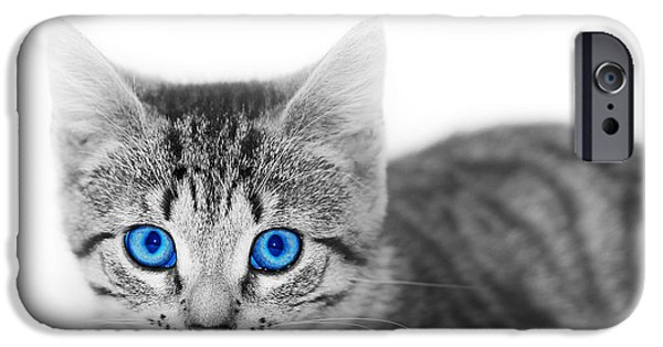 Gray Hair iPhone Cases - LIttle cute kitten. Space for your text iPhone Case by Michal Bednarek