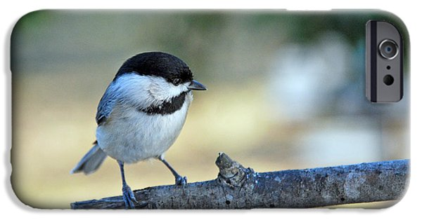 Birds iPhone Cases - Little Darlin iPhone Case by Skip Willits