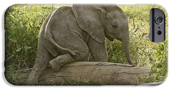 Elephant iPhone Cases - Little Elephant Big Log iPhone Case by Michele Burgess