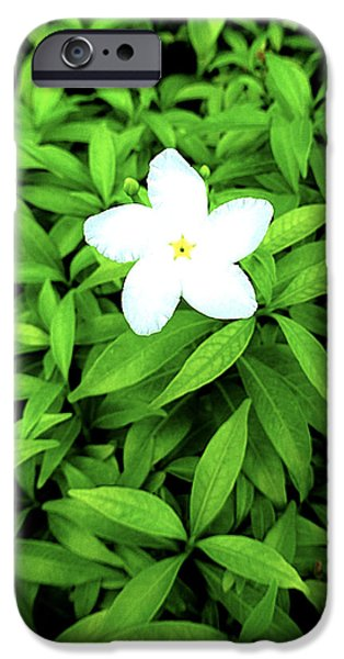 Little Pyrography iPhone Cases - Little flower iPhone Case by Girish J