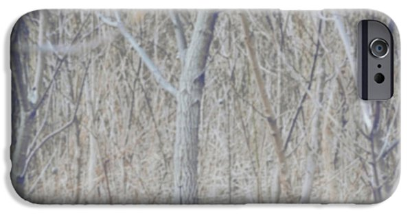 Winter Trees Photographs iPhone Cases - Little Fox in the Woods 2 iPhone Case by Carrie Ann Grippo-Pike