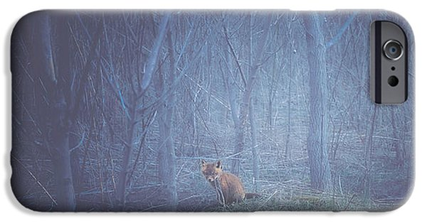 Red Fox iPhone Cases - Little Fox in the Woods iPhone Case by Carrie Ann Grippo-Pike