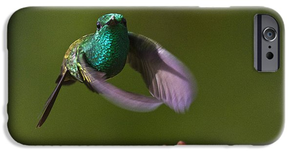 Flight iPhone Cases - Little Hedgehopper iPhone Case by Heiko Koehrer-Wagner