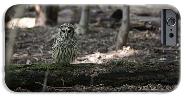 Barred Owl iPhone Cases - Little People of the Forest iPhone Case by Everet Regal