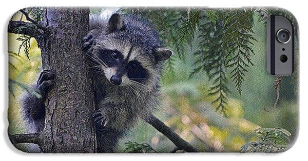 Raccoon Digital Art iPhone Cases - Little Raccoon iPhone Case by Maria Angelica Maira