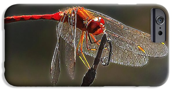 Summer iPhone Cases - Little Red Dragon 2 iPhone Case by Bill Caldwell -        ABeautifulSky Photography