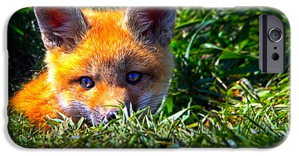 Little iPhone Cases - Little Red Fox iPhone Case by Bob Orsillo